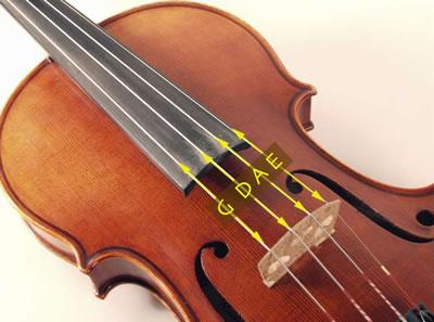 小提琴琴弦的构成