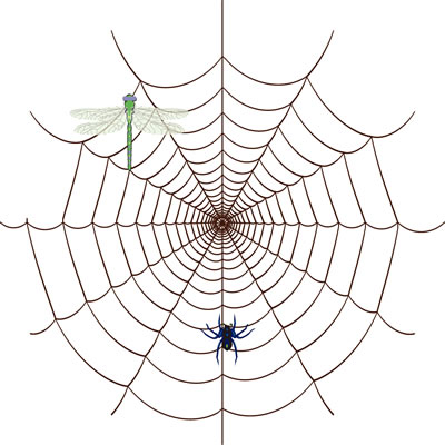 利用蜘蛛丝来制作小提琴琴弦